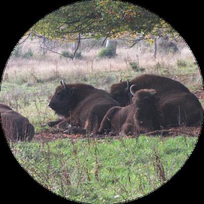 Ausflugstipp Wildpark - Ferienwohnung und Monteurwohnung in Bad Laasphe