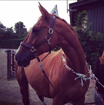 Geburtstagspferd
