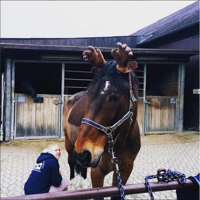 Ist es ein Pferd oder ein Elch?