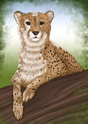 Gepard - Zoo Leipzig