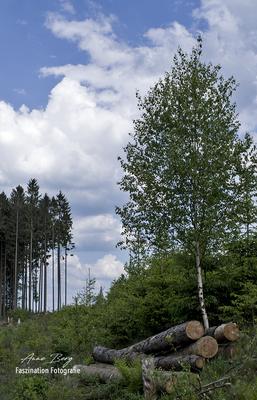 Im Wald -Mai 2018-