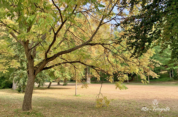 Oktober 2020 -Kissingen-