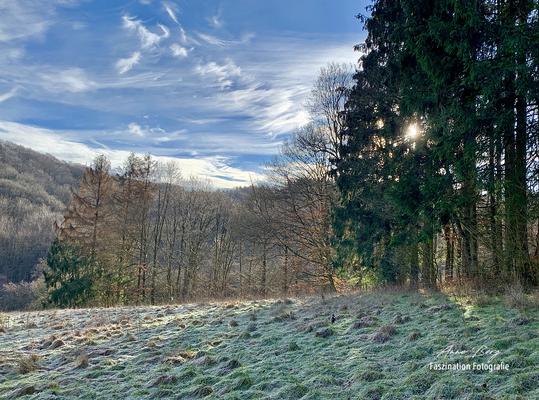 Februar 2019 -Handyfoto-