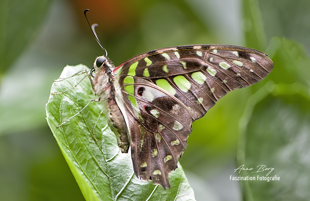 Schmetterlingspark Klütz-Boltenhagen  September 2019