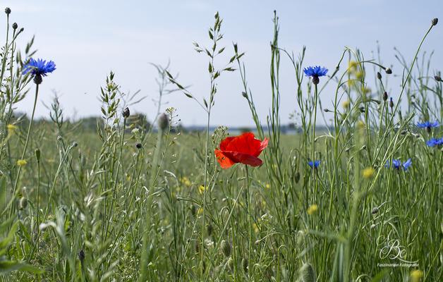 Am Wiesenrand  -Mai 16-
