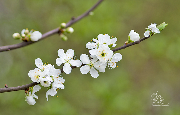 Frühlingserwachen  -April 16-