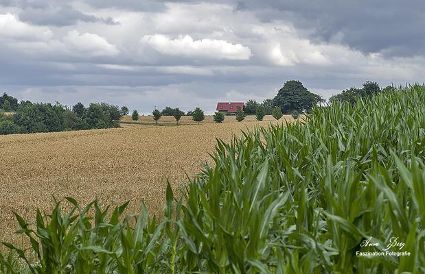 Breckerfeld  -Juli17-