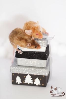 Texel - Danke für das Bild an Once upon a mouse!