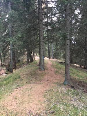 Endlich Downhill, hier eine einfache Passage