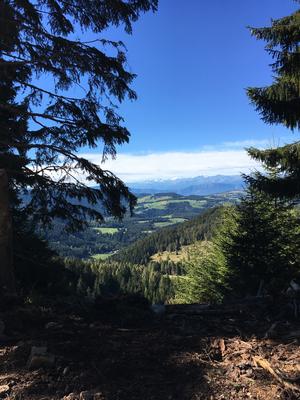 Blick vom Karer Wald nach Westen über das Bozener Becken