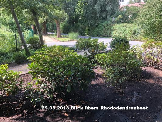 25.08.2018 Rhododendrenbeet
