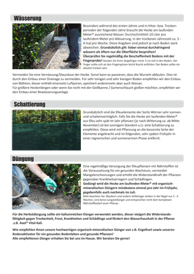 Einbau- und Pflegeanleitung - Fertighecken - Mobilane Fertighecke - Efeuhecke (3)