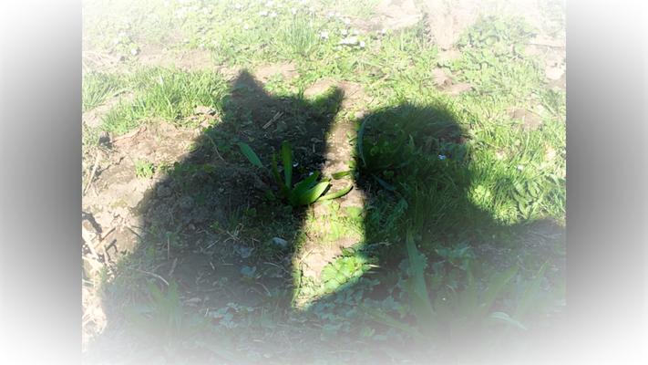 Oft nötigte das Leben mir ab, über meinen eigenen Schatten zu springen, aber meistens machte mein Frauchen dabei mit.