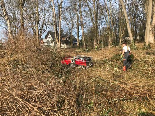 Rodungsarbeiten für die Landeshauptstadt Wiesbaden