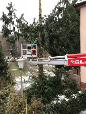 Baumfällung mit einem Steiger von Gl-Verleih