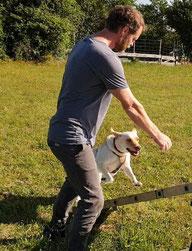 Agility Sport mit Hund Emmi