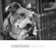 sesión exteriores outdoor perros gatos fotografía fotógrafo de perros fotógrafo de mascotas