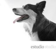 sesión estudio studio perros gatos fotografía fotógrafo de perros fotógrafo de mascotas