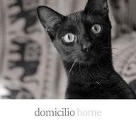 sesión fotográfica domicilio home perros gatos fotografía fotógrafo de perros fotógrafo de mascotas