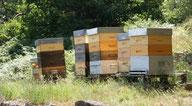 La rando-miel