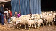 Balade à la ferme de Bolze