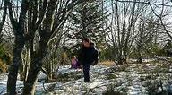 Sortie raquette en forêt, au cœur des bois de Taranis