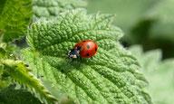 sparsamer Pestizideinsatz zum Schutz der Natur