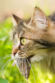 Katzentherapie