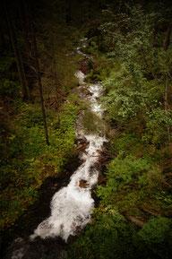 Survival und Buschkraft / Gefahren erkennen und vorbeugen Wasser generieren und aufbereiten