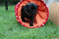 Fenna, 6,5 Wochen alt