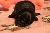 Fürst Lucifer, 3 Tage alt