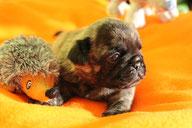 Erwin, 2,5 Wochen alt