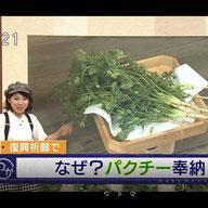 NHK「希望のパクチーで復興祈願」