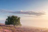 Landschapsfotografie: Een eenzamen boom in de mist op de Posbank