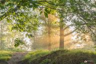 Landschapsfotografie: zonnestralen door de bomen van het bos