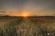Landschapsfotografie: Zonsondergang-boven-een-graanveld-in-de-gemeente-Werkendam