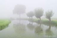 Mist in de Alblasserwaard