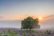 Landschapsfotografie: Het zachte licht van de zon door mist boven een bloeiende Posbank