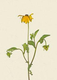 Blume (#31), Pigmentdruck auf Hahnemühle Photo Rag 308 g/m²