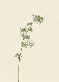 Pflanze (#1), Pigmentdruck auf Hahnemühle Photo Rag 308 g/m²