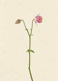 Blume (#48), Pigmentdruck auf Hahnemühle Photo Rag 308 g/m²