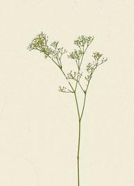 Pflanze (#5), Pigmentdruck auf Hahnemühle Photo Rag 308 g/m²