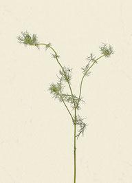 Pflanze (#2), Pigmentdruck auf Hahnemühle Photo Rag 308 g/m²