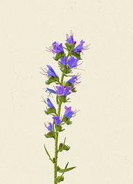 Blume (#21), Pigmentdruck auf Hahnemühle Photo Rag 308 g/m²