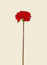 Blume (#15), Pigmentdruck auf Hahnemühle Photo Rag 308 g/m²
