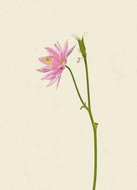 Blume (#47), Pigmentdruck auf Hahnemühle Photo Rag 308 g/m²