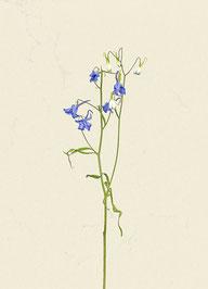 Blume (#40), Pigmentdruck auf Hahnemühle Photo Rag 308 g/m²
