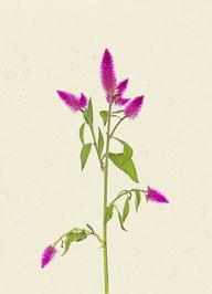 Blume (#39), Pigmentdruck auf Hahnemühle Photo Rag 308 g/m²