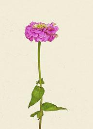 Blume (#10), Pigmentdruck auf Hahnemühle Photo Rag 308 g/m²