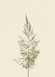 Gras (#3), Pigmentdruck auf Hahnemühle Photo Rag 308 g/m²